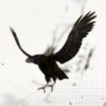 weslenmartins's avatar